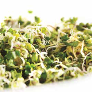 Green Valley Food Corp. BROCCOLI DELI SPROUTS