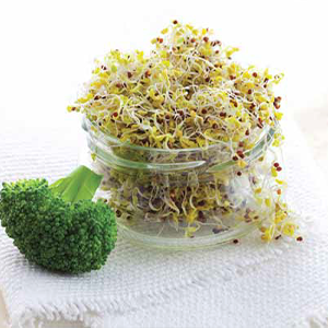 Green Valley Food Corp. BROCCOLI SPROUTS